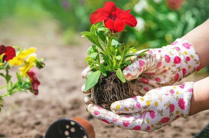 园丁正在种一个花园