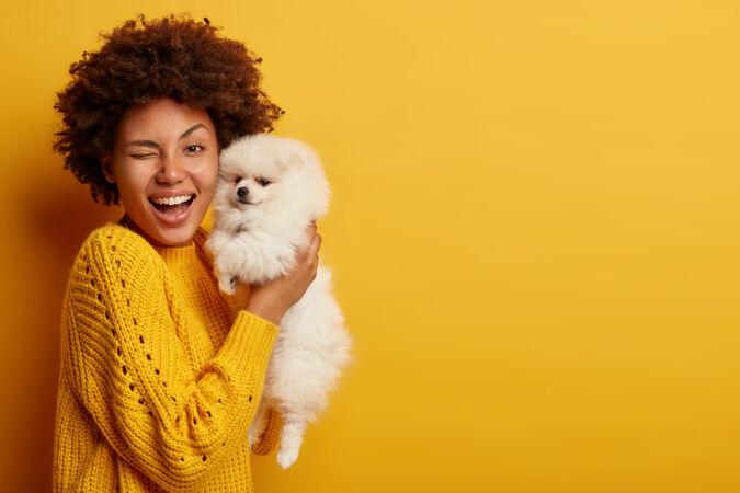 乐观的女士横拍眨眼 高兴地买了一条狗 抱着白色的斯皮茨小狗 在室内一起玩 穿着针织套头衫 在室内对着黄墙摆姿势